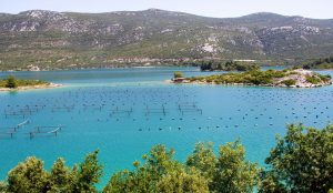 Ston Oysters And Wine Tour