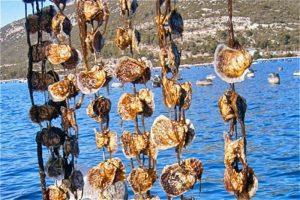 Ston Oysters And Wine Tour Oyster Farm