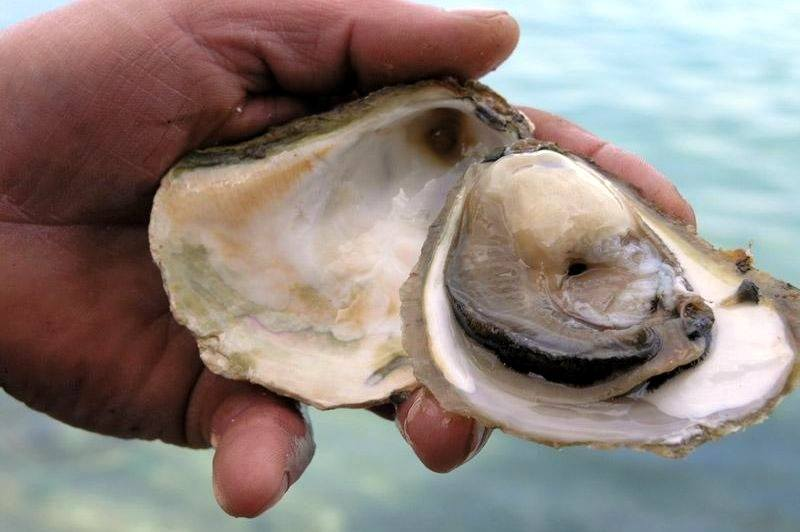 Things To Do In Pelješac Peninsula | Ston Oysters